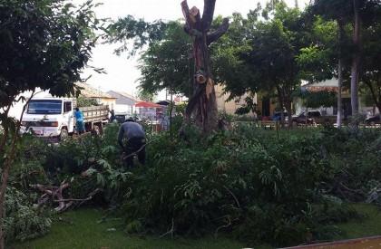Capote derruba árvores históricas do centro de Barras
