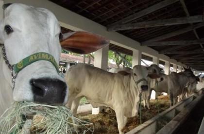45ª Exposição Feira Agropecuária já tem data definida