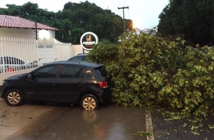 Chuva causa transtorno e derruba árvores em toda Teresina