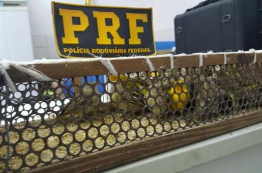 PRF apreende pássaros transportados ilegalmente