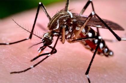 PI apresenta 57 cidades em área de risco para febre amarela