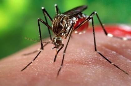 Piauí apresenta redução de casos de dengue, chikungunya e zika