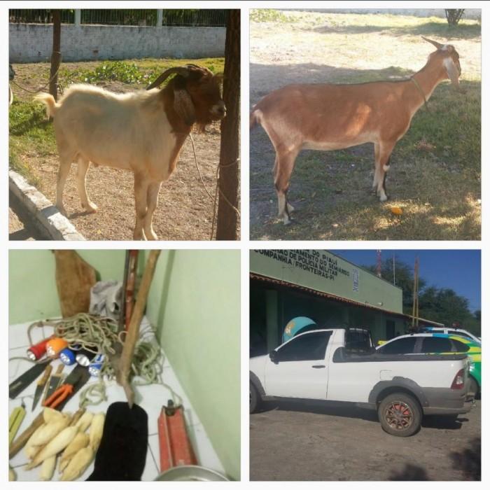Bando é preso por roubar caprinos e ovinos no sul do Piauí