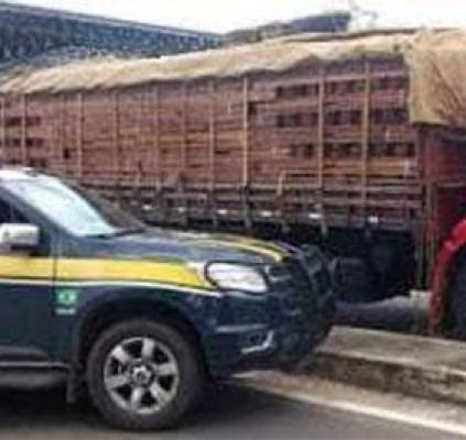 PRF apreende 49 toneladas de madeira irregular...
