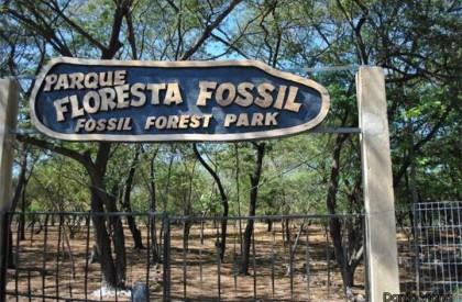 Teresina: Parque Floresta Fóssil passará por intervenção em 2019