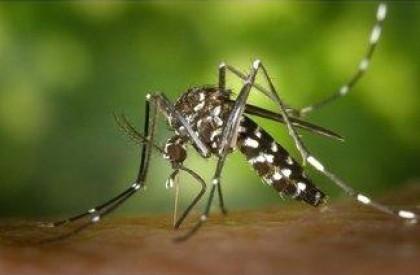 Cresce número de notificações de Dengue no Piauí