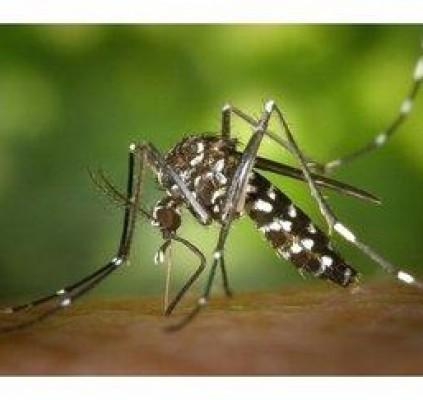 Cresce número de notificações de Dengue no...