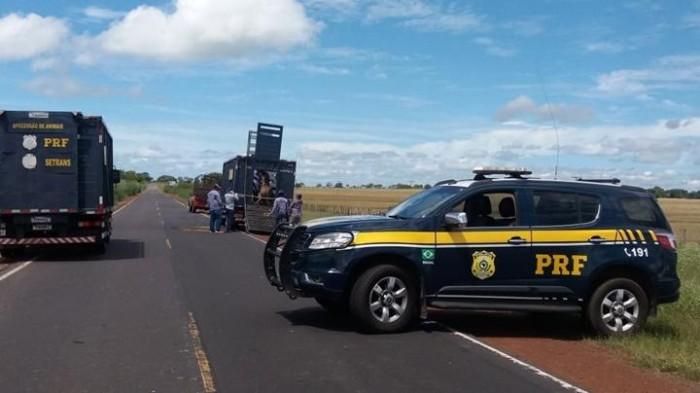 PRF realiza operação de apreensão de animais no norte do Piauí