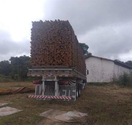 Semar apreende duas cargas de madeira extraída...