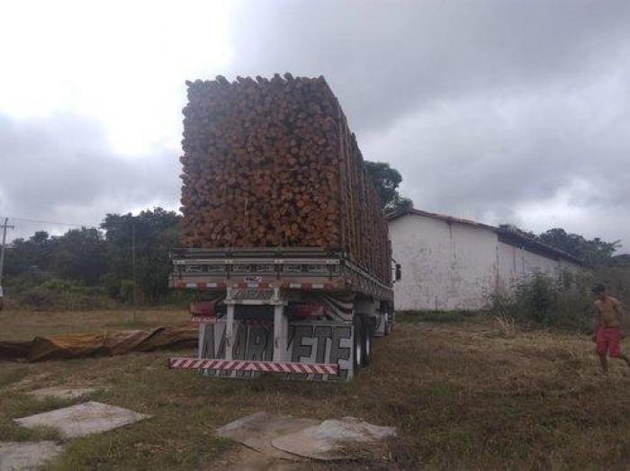 Semar apreende duas cargas de madeira extraída ilegalmente