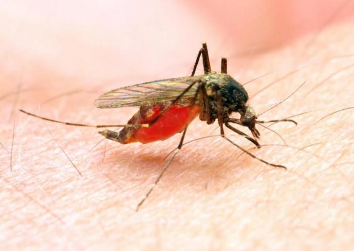 Surto de malária em Joca Marques é controlado