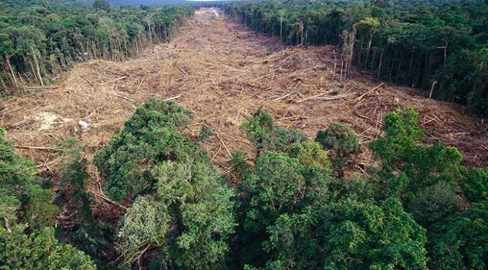 Desmatamento na Amazônia bate recorde nesta década e cresce 29,5% em 12 meses